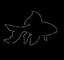 casino slang fish
