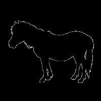 casino slang pony