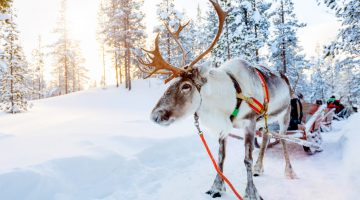 Winter is the best time to travel to Lapland via slots